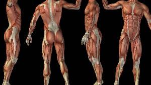 Anatomisch-physiologische Grundlagen